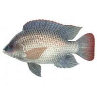 فایل اموزش راه اندازی فارم ماهی