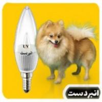 لامپ ویتامینه  سگ 3وات